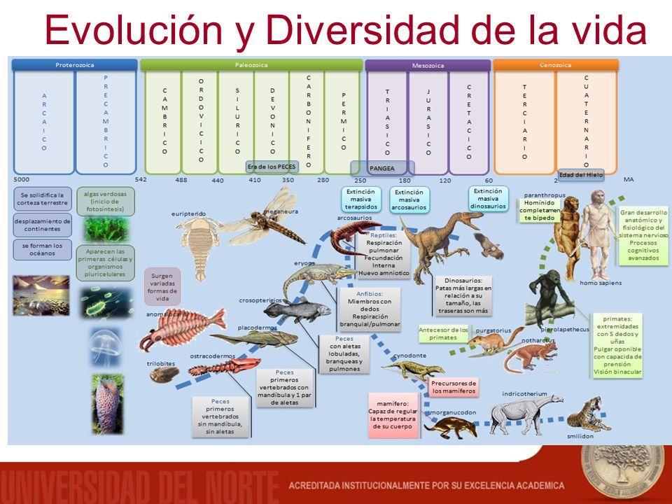 Evolución y Diversidad de la vida