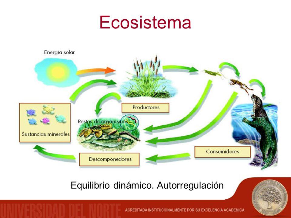 Ecosistema Equilibrio dinámico. Autorregulación
