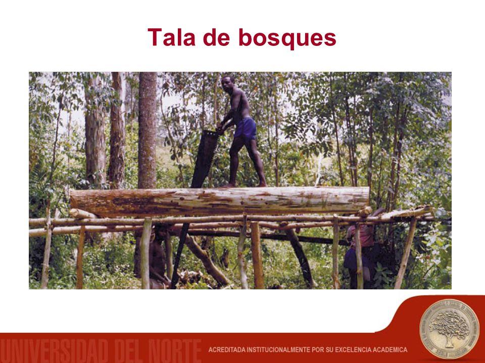 Tala de bosques