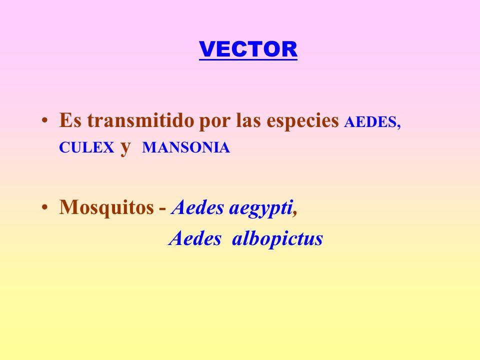 Es transmitido por las especies AEDES, CULEX y MANSONIA Mosquitos - Aedes aegypti, Aedes albopictus