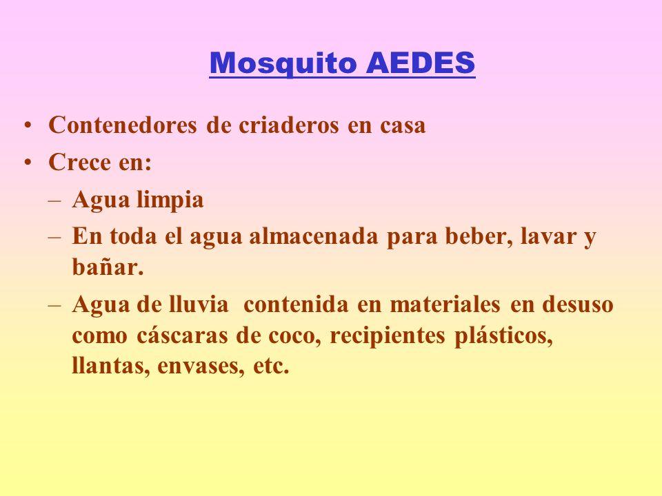 Mosquito AEDES Contenedores de criaderos en casa Crece en: –Agua limpia –En toda el agua almacenada para beber, lavar y bañar.