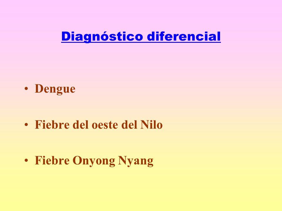 Diagnóstico diferencial Dengue Fiebre del oeste del Nilo Fiebre Onyong Nyang