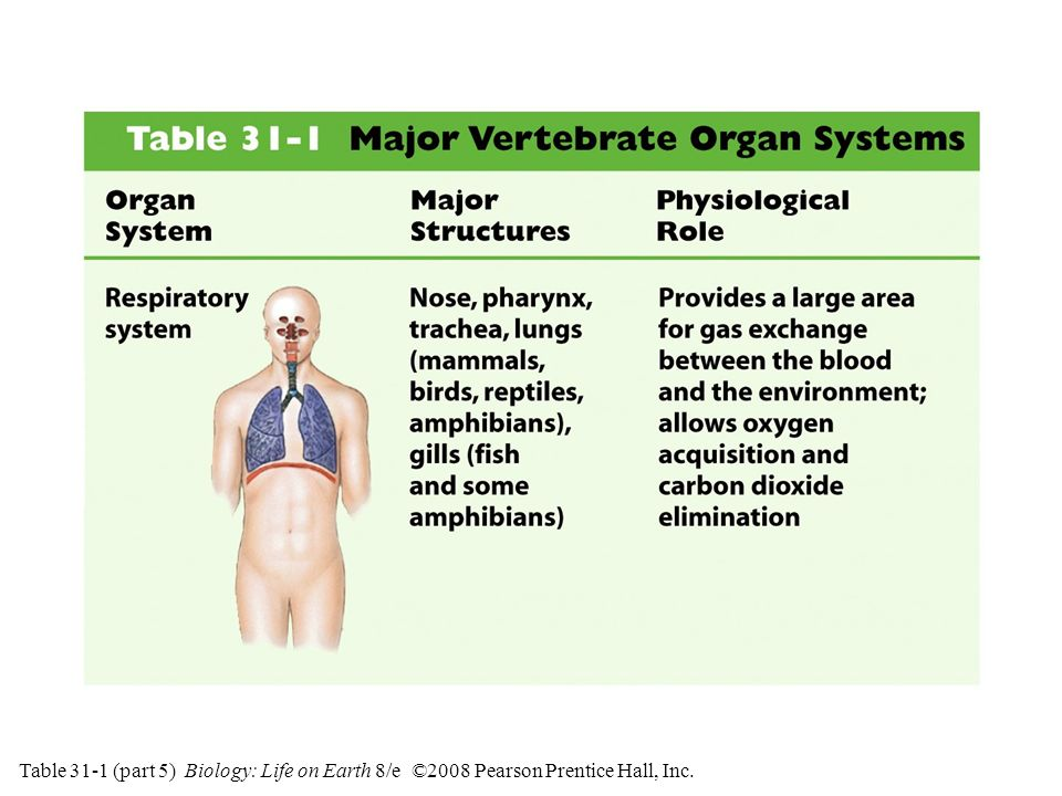 Table 31-1 (part 5) Biology: Life on Earth 8/e ©2008 Pearson Prentice Hall, Inc.