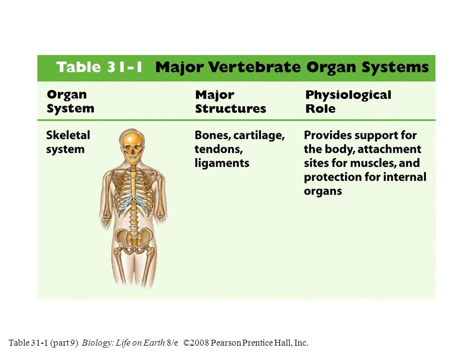 Table 31-1 (part 9) Biology: Life on Earth 8/e ©2008 Pearson Prentice Hall, Inc.