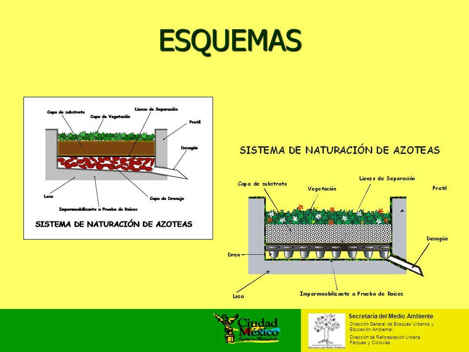 ESQUEMAS Secretaría del Medio Ambiente Dirección General de Bosques Urbanos y Educación Ambiental. Dirección de Reforestación Urbana, Parques y Ciclov