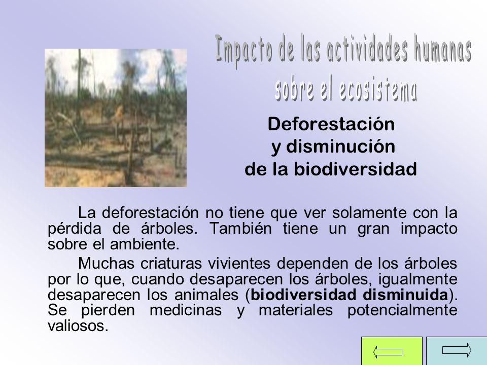 Deforestación y disminución de la biodiversidad La deforestación no tiene que ver solamente con la pérdida de árboles. También tiene un gran impacto s