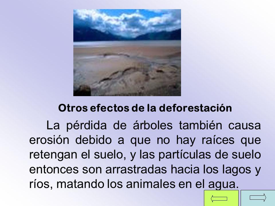Otros efectos de la deforestación La pérdida de árboles también causa erosión debido a que no hay raíces que retengan el suelo, y las partículas de su