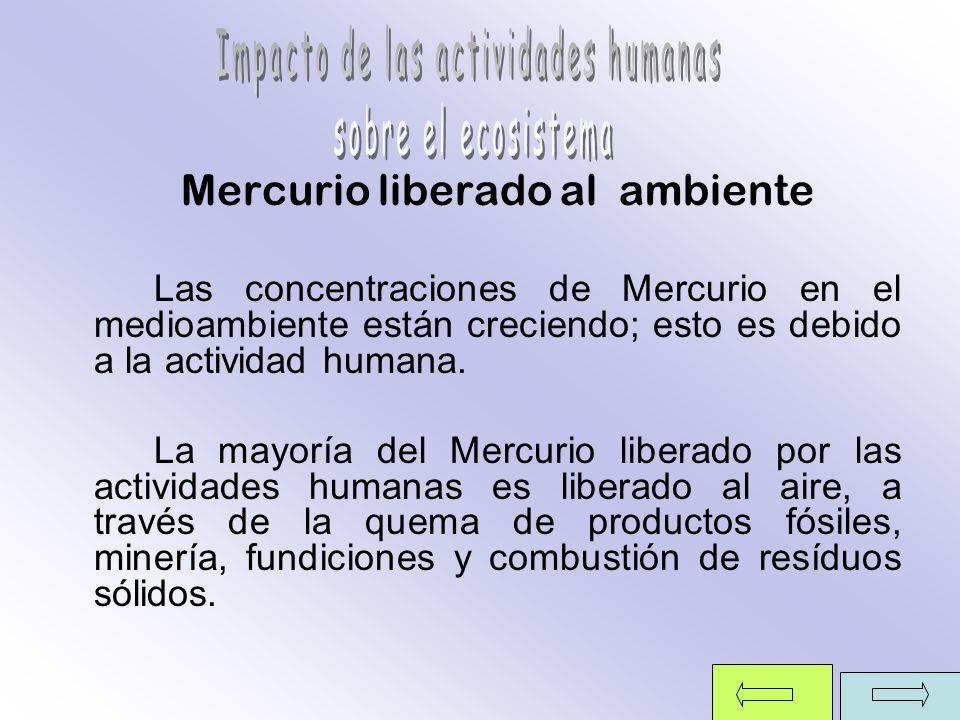 Mercurio liberado al ambiente Las concentraciones de Mercurio en el medioambiente están creciendo; esto es debido a la actividad humana. La mayoría de