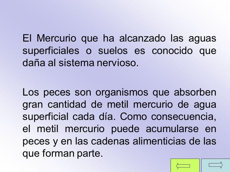 El Mercurio que ha alcanzado las aguas superficiales o suelos es conocido que daña al sistema nervioso. Los peces son organismos que absorben gran can