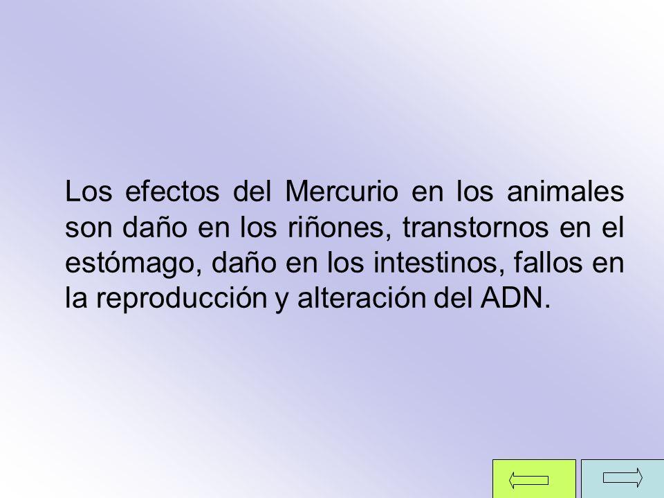 Los efectos del Mercurio en los animales son daño en los riñones, transtornos en el estómago, daño en los intestinos, fallos en la reproducción y alte