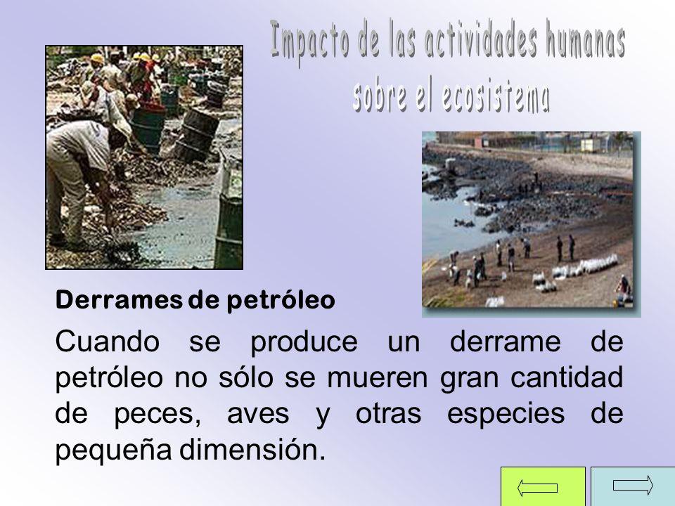 Derrames de petróleo Cuando se produce un derrame de petróleo no sólo se mueren gran cantidad de peces, aves y otras especies de pequeña dimensión.