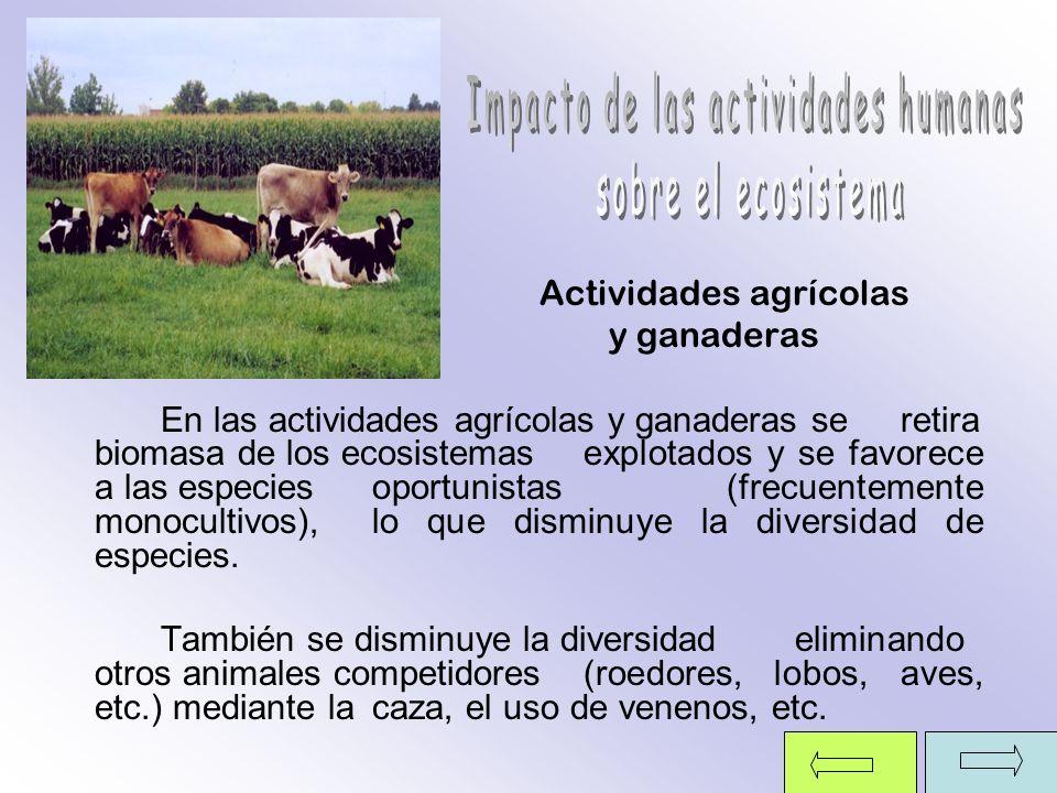 Actividades agrícolas y ganaderas En las actividades agrícolas y ganaderas se retira biomasa de los ecosistemas explotados y se favorece a las especie