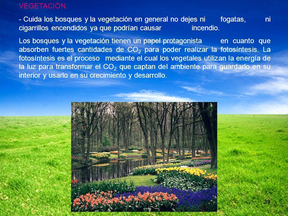 39 VEGETACIÓN: - Cuida los bosques y la vegetación en general no dejes ni fogatas, ni cigarrillos encendidos ya que podrían causar incendio. Los bosqu
