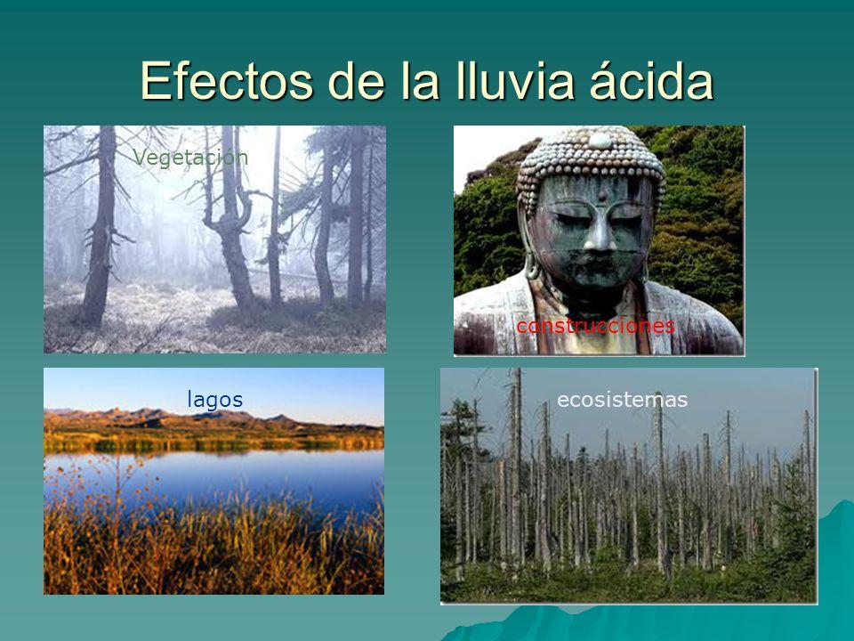 Efectos de la lluvia ácida Vegetación construcciones lagosecosistemas