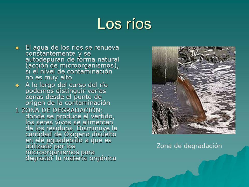 Los ríos El agua de los rios se renueva constantemente y se autodepuran de forma natural (acción de microorganismos), si el nivel de contaminación no