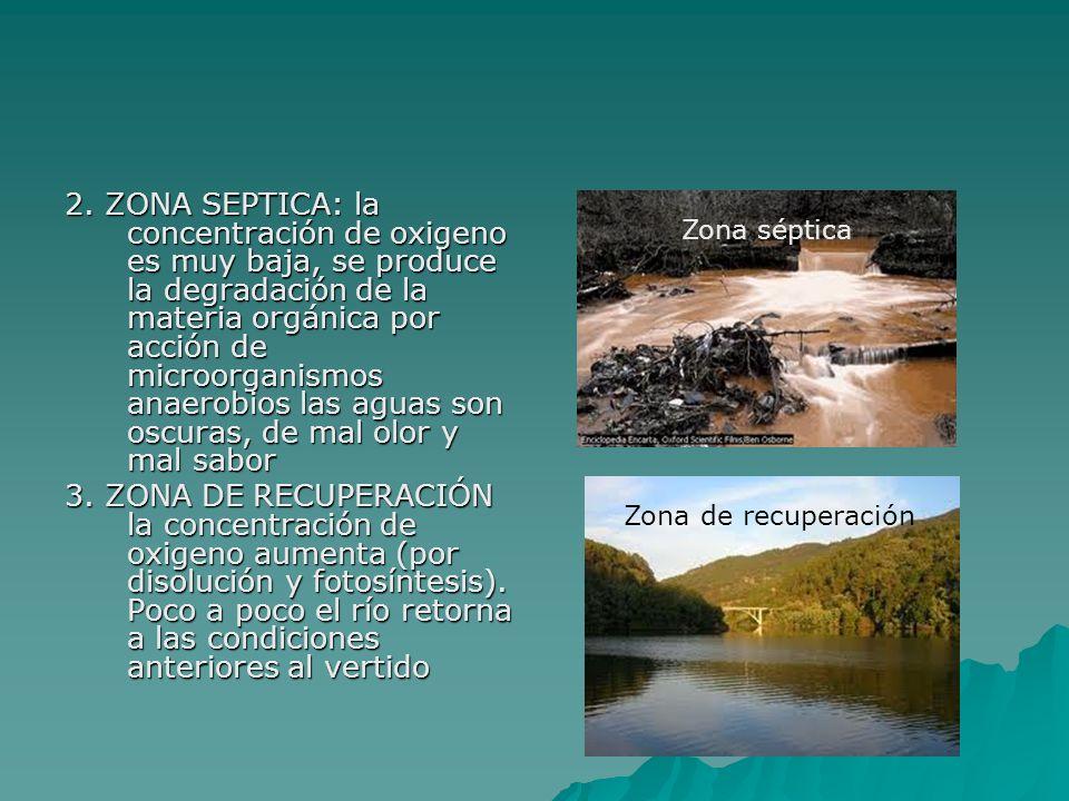 2. ZONA SEPTICA: la concentración de oxigeno es muy baja, se produce la degradación de la materia orgánica por acción de microorganismos anaerobios la