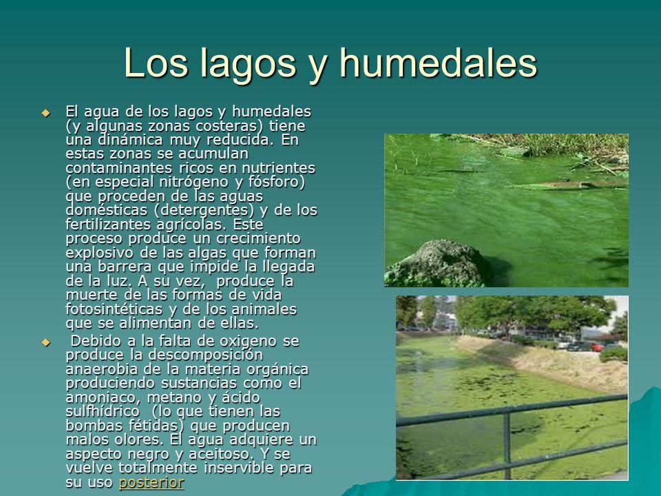 Los lagos y humedales El agua de los lagos y humedales (y algunas zonas costeras) tiene una dinámica muy reducida. En estas zonas se acumulan contamin