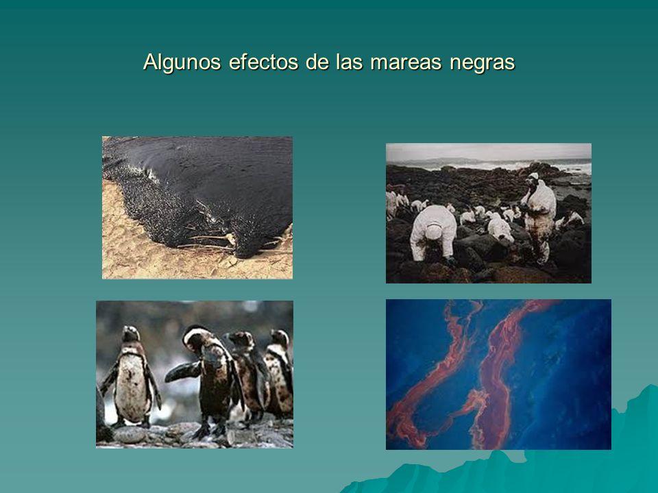 Algunos efectos de las mareas negras