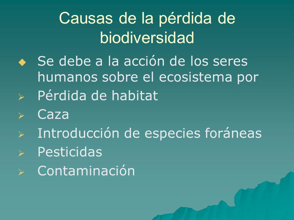 Causas de la pérdida de biodiversidad Se debe a la acción de los seres humanos sobre el ecosistema por Pérdida de habitat Caza Introducción de especie