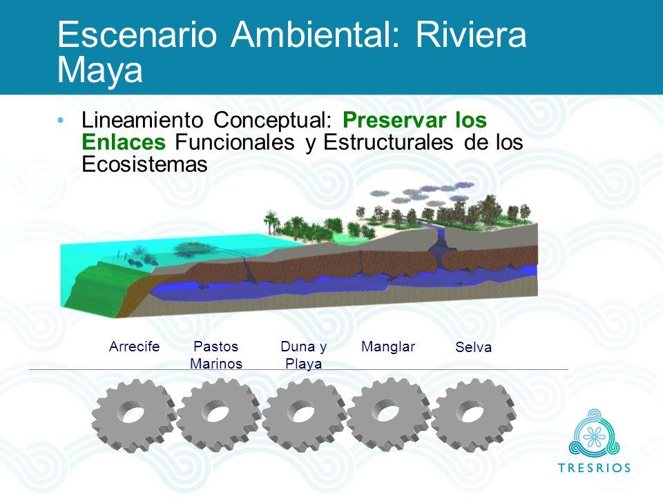 Selva ManglarDuna y Playa Pastos Marinos Arrecife Escenario Ambiental: Riviera Maya Lineamiento Conceptual: Preservar los Enlaces Funcionales y Estruc