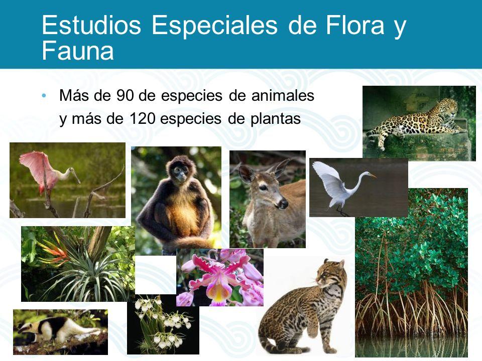 Estudios Especiales de Flora y Fauna Más de 90 de especies de animales y más de 120 especies de plantas