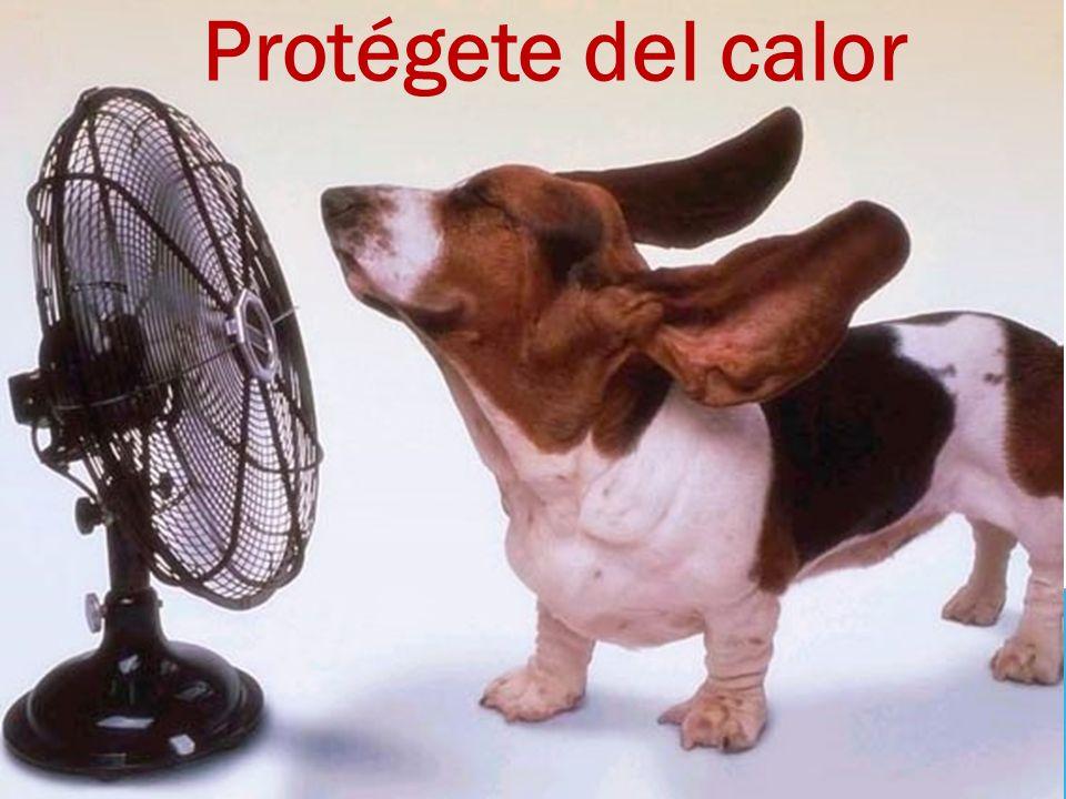 Cuidados en temporada de calor