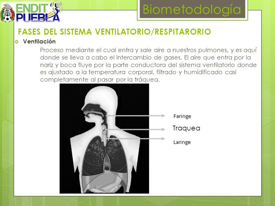 FASES DEL SISTEMA VENTILATORIO/RESPITARORIO Ventilación Proceso mediante el cual entra y sale aire a nuestros pulmones, y es aquí donde se lleva a cab