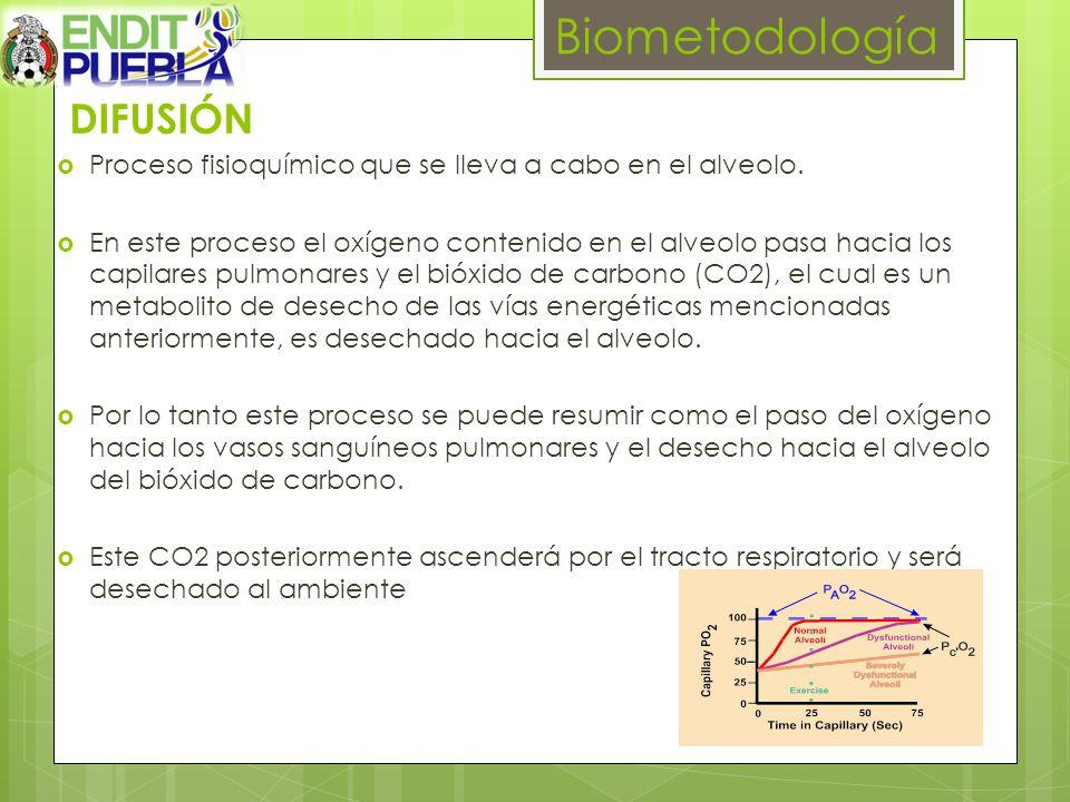 DIFUSIÓN Proceso fisioquímico que se lleva a cabo en el alveolo. En este proceso el oxígeno contenido en el alveolo pasa hacia los capilares pulmonare