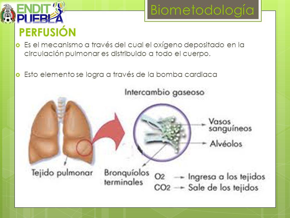 PERFUSIÓN Es el mecanismo a través del cual el oxígeno depositado en la circulación pulmonar es distribuido a todo el cuerpo. Esto elemento se logra a