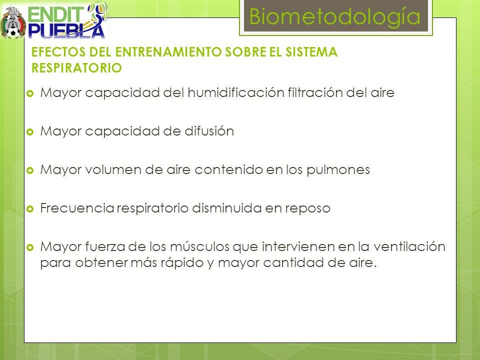 EFECTOS DEL ENTRENAMIENTO SOBRE EL SISTEMA RESPIRATORIO Biometodología Mayor capacidad del humidificación filtración del aire Mayor capacidad de difus