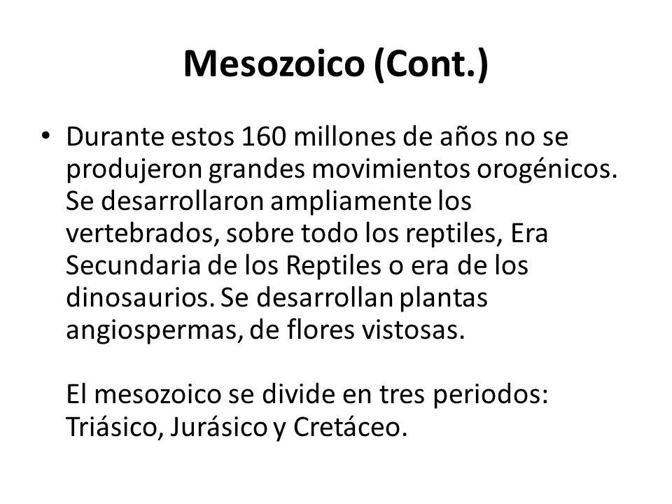 Mesozoico (Cont.) Durante estos 160 millones de años no se produjeron grandes movimientos orogénicos. Se desarrollaron ampliamente los vertebrados, so