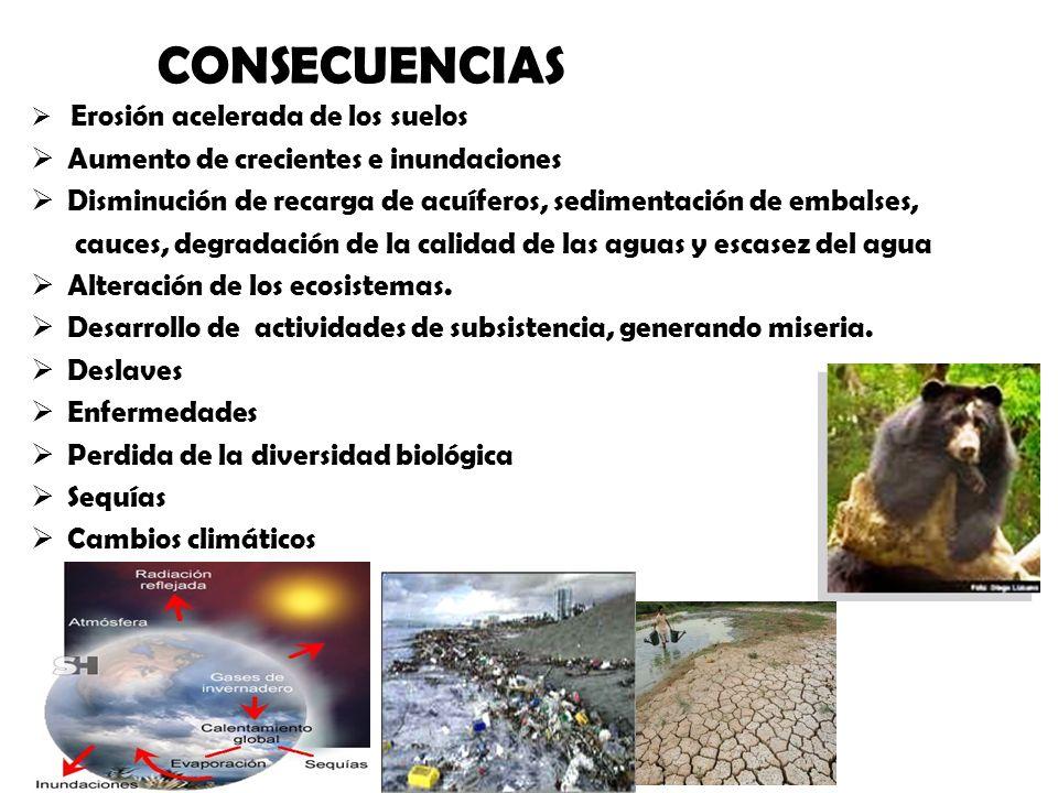ALGUNAS CONSECUENCIAS Erosión acelerada de los suelos Aumento de crecientes e inundaciones Disminución de recarga de acuíferos, sedimentación de embal