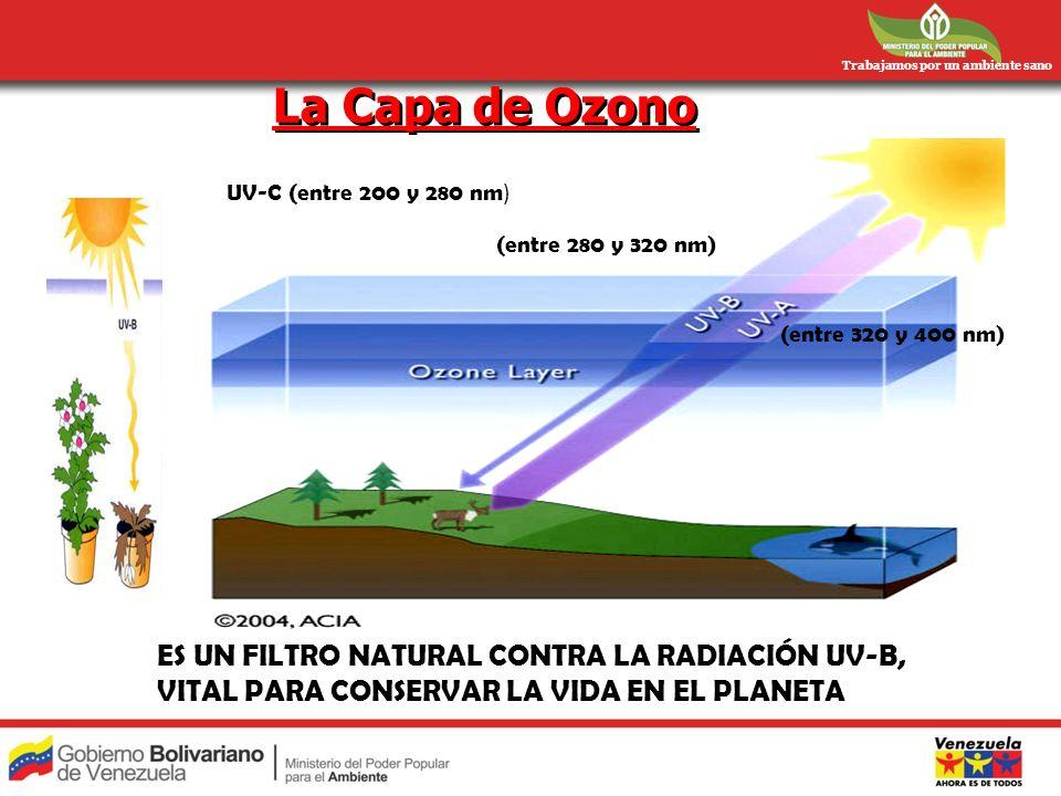 Trabajamos por un ambiente sano La Capa de Ozono ES UN FILTRO NATURAL CONTRA LA RADIACIÓN UV-B, VITAL PARA CONSERVAR LA VIDA EN EL PLANETA UV-C (entre