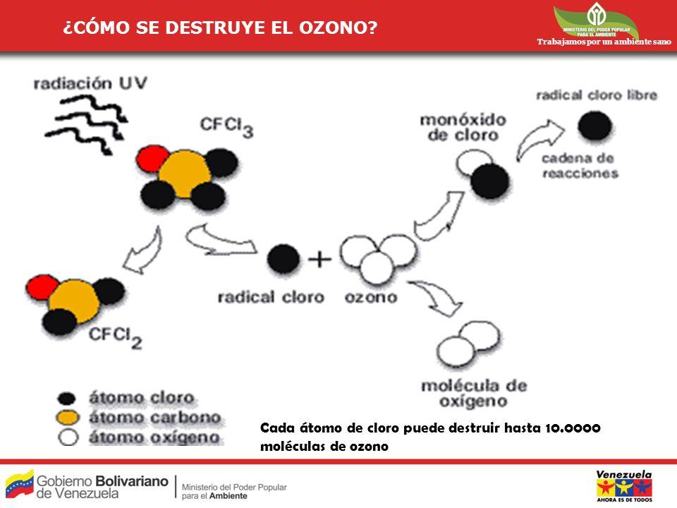 Trabajamos por un ambiente sano ¿CÓMO SE DESTRUYE EL OZONO? Cada átomo de cloro puede destruir hasta 10.0000 moléculas de ozono
