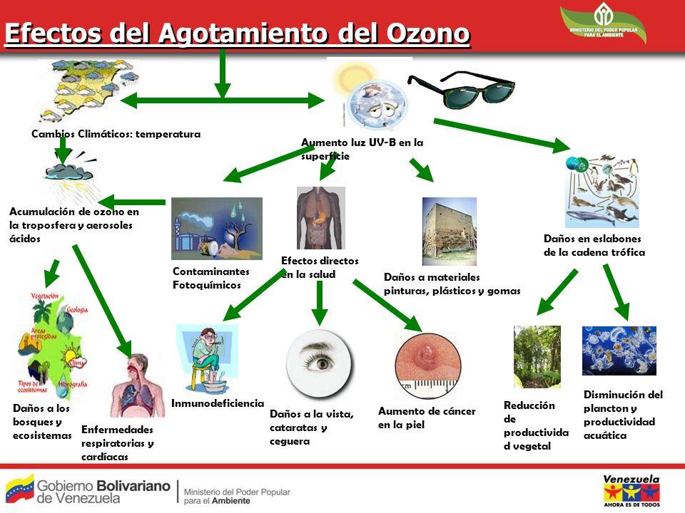 Efectos del Agotamiento del Ozono Daños a los bosques y ecosistemas Acumulación de ozono en la troposfera y aerosoles ácidos Cambios Climáticos: tempe