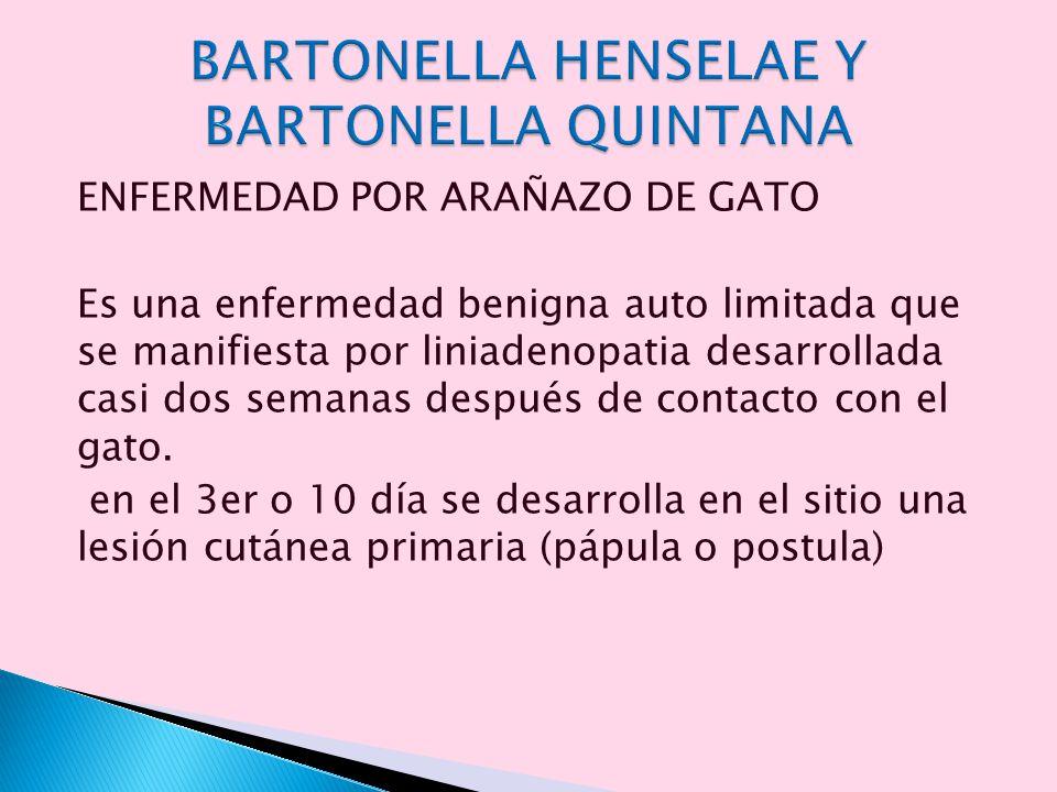 ENFERMEDAD POR ARAÑAZO DE GATO Es una enfermedad benigna auto limitada que se manifiesta por liniadenopatia desarrollada casi dos semanas después de c