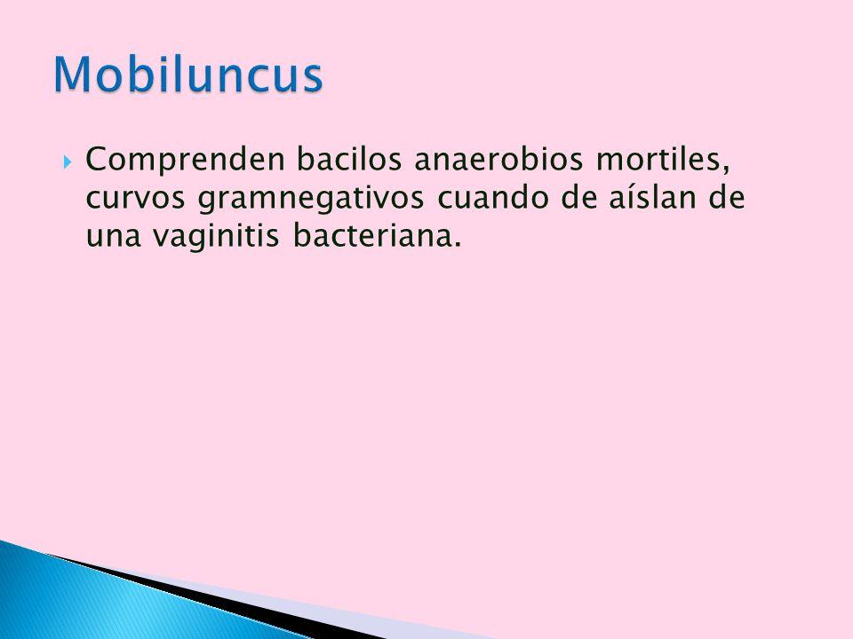 Comprenden bacilos anaerobios mortiles, curvos gramnegativos cuando de aíslan de una vaginitis bacteriana.