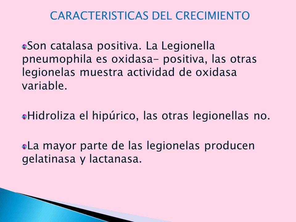 Las concentraciones de anticuerpos contra la legionela aumentan con la lentitud durante la enfermedad.