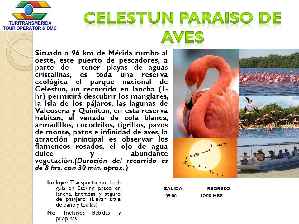 Situado a 96 km de Mérida rumbo al oeste, este puerto de pescadores, a parte de tener playas de aguas cristalinas, es toda una reserva ecológica el pa