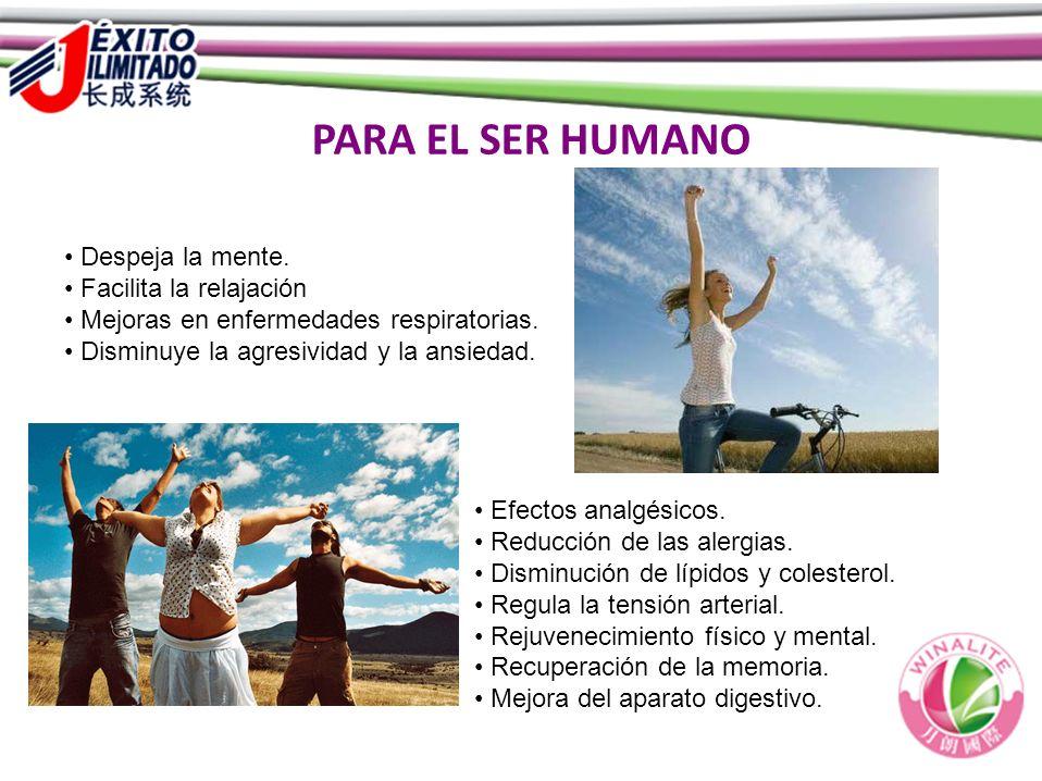 PARA EL SER HUMANO Despeja la mente. Facilita la relajación Mejoras en enfermedades respiratorias. Disminuye la agresividad y la ansiedad. Efectos ana