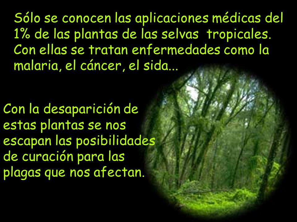 60 000 especies vegetales están en peligro de extinción.