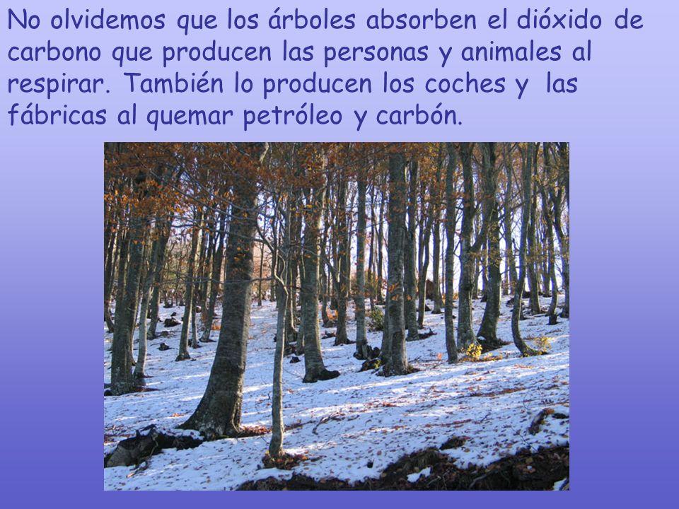 Existe una etiqueta de Certificación Forestal Sostenible ( tres árboles plantados por cada uno que se tala) que permite a los consumidores identificar