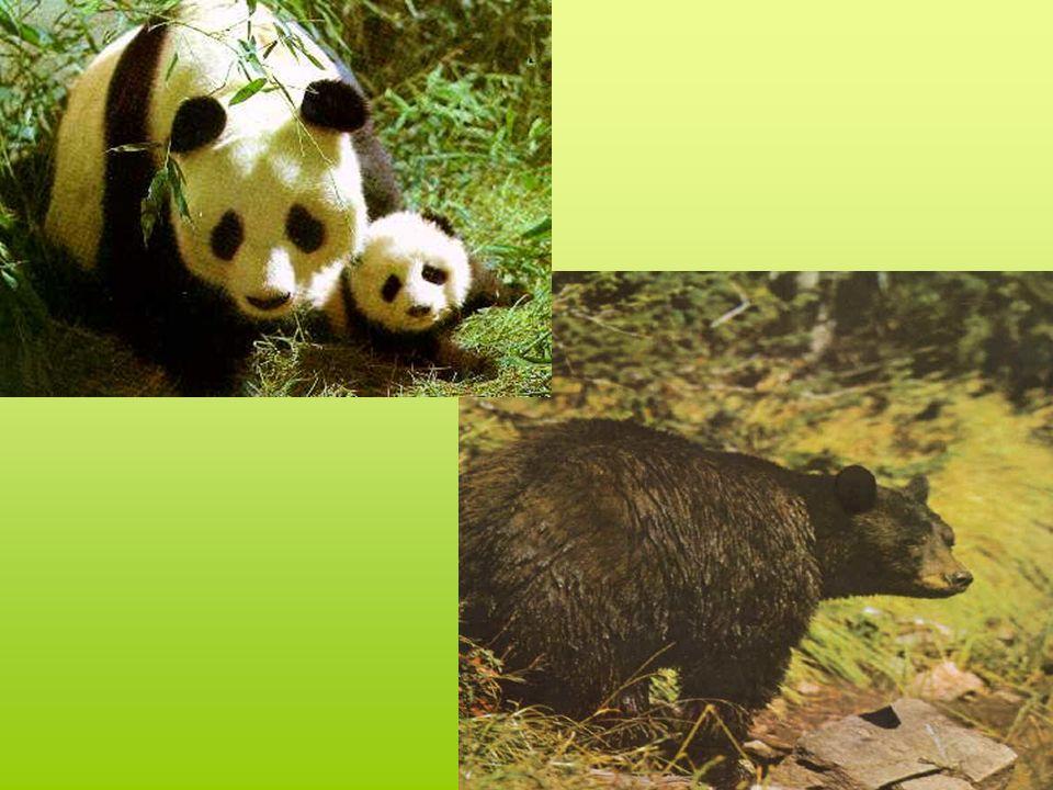 16 000 especies animales están en peligro de extinción