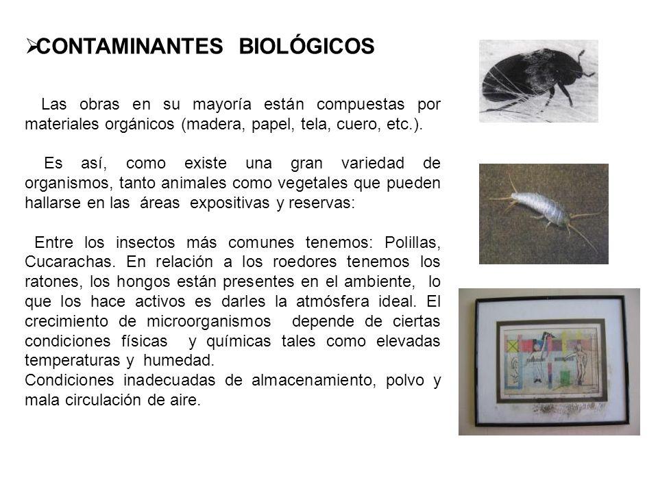 CONTAMINANTES BIOLÓGICOS Las obras en su mayoría están compuestas por materiales orgánicos (madera, papel, tela, cuero, etc.). Es así, como existe una