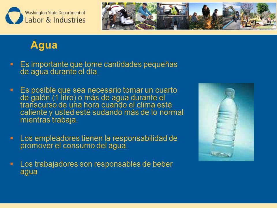 Agua Es importante que tome cantidades pequeñas de agua durante el día.