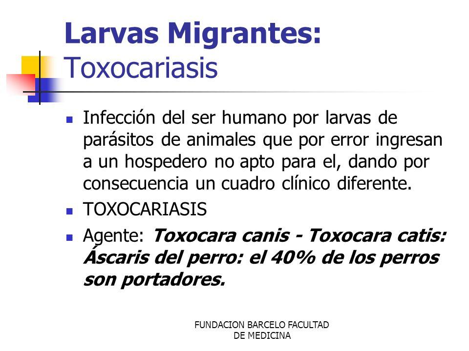 FUNDACION BARCELO FACULTAD DE MEDICINA Larvas Migrantes: Toxocariasis Infección del ser humano por larvas de parásitos de animales que por error ingre