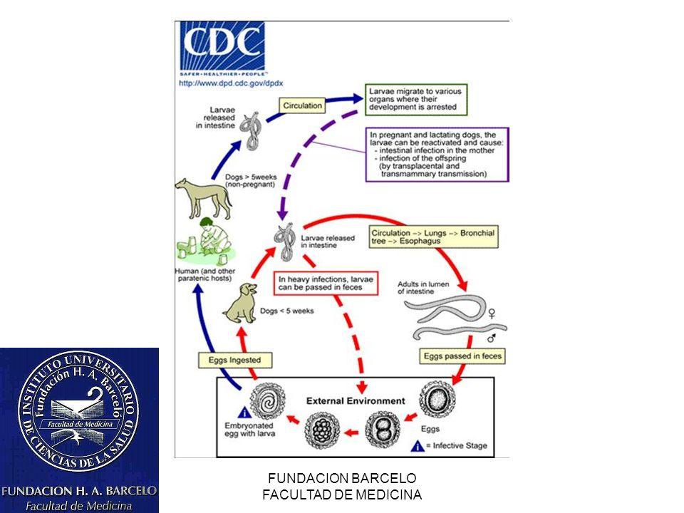 FUNDACION BARCELO FACULTAD DE MEDICINA