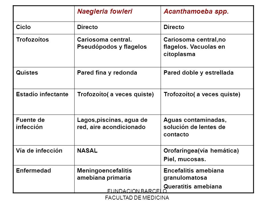 FUNDACION BARCELO FACULTAD DE MEDICINA Naegleria fowleriAcanthamoeba spp. CicloDirecto TrofozoítosCariosoma central. Pseudópodos y flagelos Cariosoma