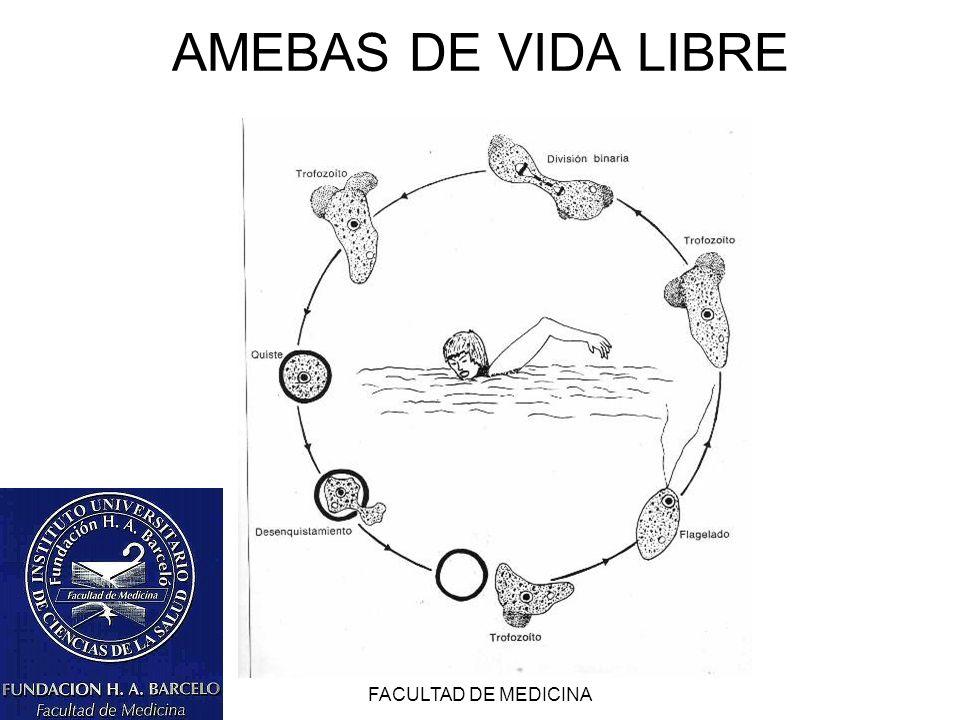 AMEBAS DE VIDA LIBRE