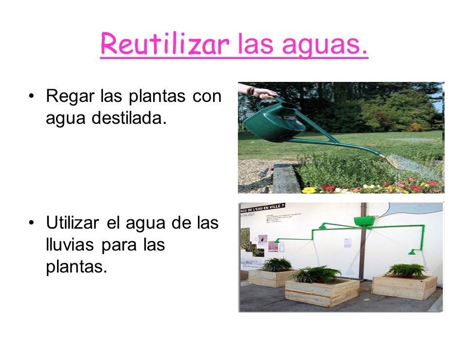 Reutilizar las aguas. Regar las plantas con agua destilada. Utilizar el agua de las lluvias para las plantas.